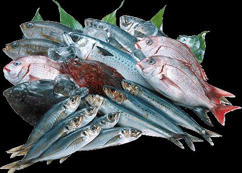富山湾で獲れる新鮮な魚介類を使用